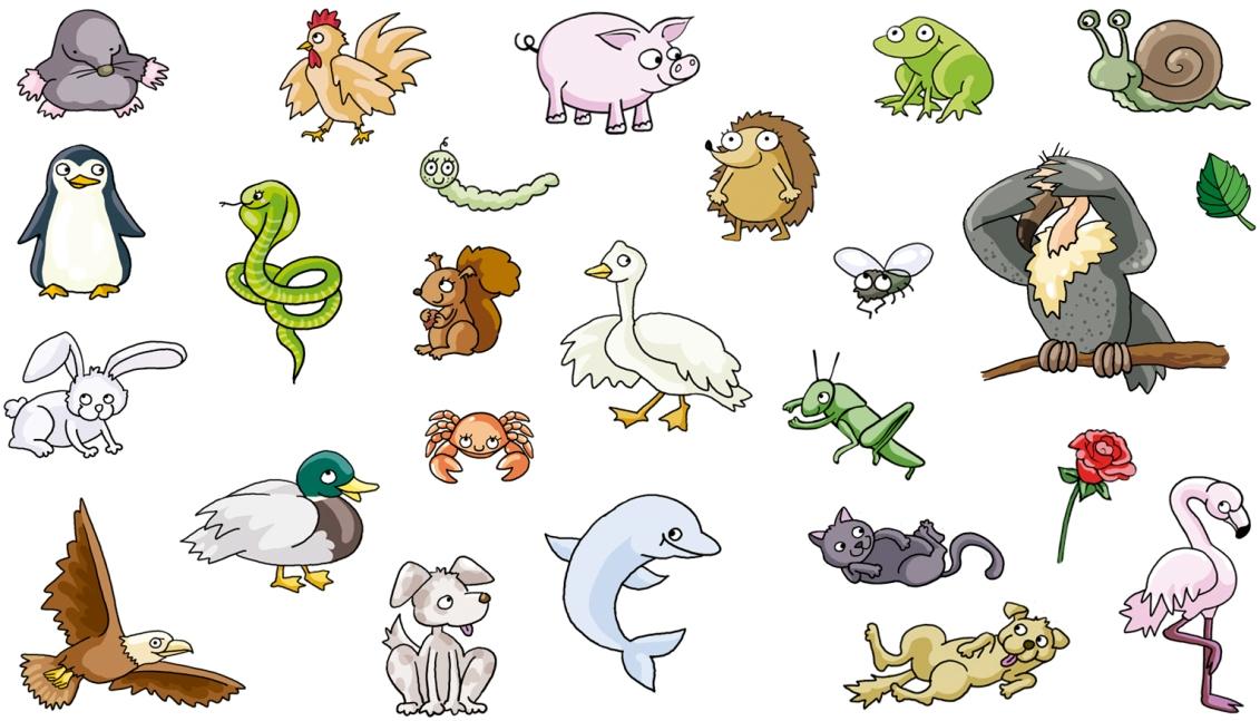 teide-animalets
